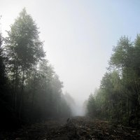 Врата леса. :: Виктория Чурилова