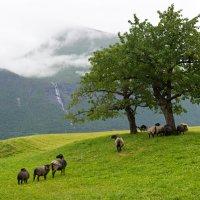 Норвегия - маленький оазис :: Dasha Fotopeak