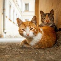 CATS :: Aleksandr Tro