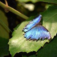 бабочка :: Виктория Гавриленко