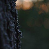 в тени деревьев :: Тася Тыжфотографиня