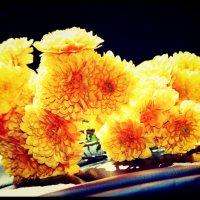 Желтые хризантемы :: Natalya секрет