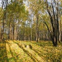 Осенний лес. :: Андрей Ярославцев