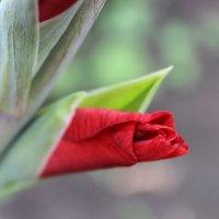 прелести природы :: Севда Финашкина