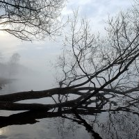 Утро туманное. :: Михаил Смуров