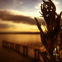 Последний закат лета :: Анна Кожевникова