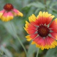 Цветы :: Olya Anikina