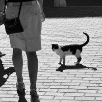 кот в г.Крондштат :: Юлия Чугунова