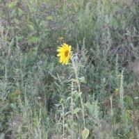 Даже в природе,среди мрачной массы,появилось жёлтое пятнышко) :: Юлия Бельцова