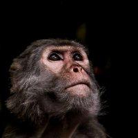 обезьяна почти человек :: Vitaliy Mytnik