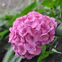 Неведомый цветок во Вроцлавском ботсаду :: Александр Матвеев