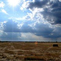 после уборки урожая :: Татьяна Ливерова