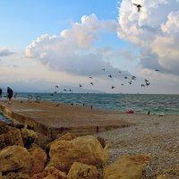 Птицы и облака :: Константин Николаенко
