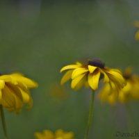Желтый цвет :: Эдуард Гончаров
