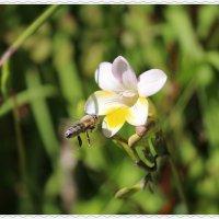 пчелка :: Natalya секрет