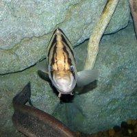 Смешная рыба :: Наталья Нарсеева