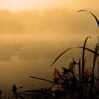 Осеннее утро у реки :: Александр Головко