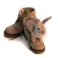 Кролик в ботинках :: Сергей Шиповалов
