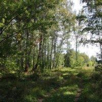 Из леса - в поле :: Александр Садовский