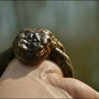 Крепкие объятия лягушонка. :: Елена Kазак