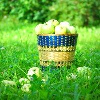 Яблочный спас :: Елена Мягкова
