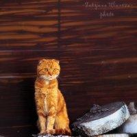 Чудеса заката, из рыжего, кот превратился в огненного.... :: Татьяна Уланова