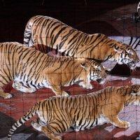 ... и тигры у ног моих сели :: Валерий Павлов