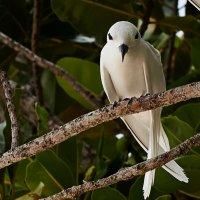 неизвестный птиц :: Сергей Рычков