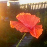 на закате :: галина лаврова