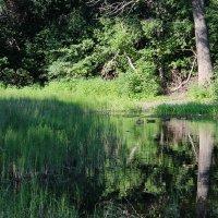 озеро в лесу :: светлана шубенко