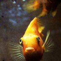 рыбка :: Виктория Ташланова