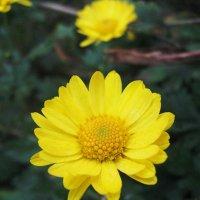 цветок :: Катя Кузьменко