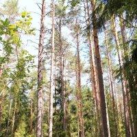 Лесными тропами :: валерия
