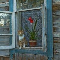 Цветок и Рыжик :: Владимир