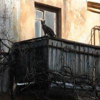 Кошкин дом :: Елена Творчество