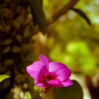 Цветок :: Творческая группа КИВИ