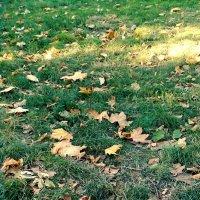 Скоро осень... :: Ляля .