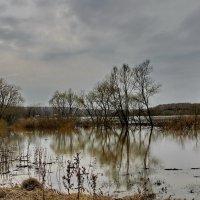 Весенний разлив :: Тамара Бучарская