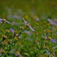 Цветочная поляна :: Helen Helen
