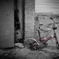 Оставлен умирать :: Alexander Solomakha