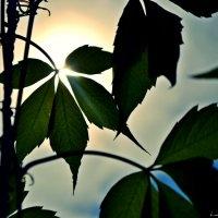солнце :: Lana Pipakina