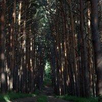 Окрестности Долины Роз :: fotovichka репортажный фотохудожник