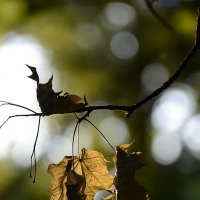 Осенний этюд 2 :: john dow
