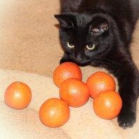 Мои мандарины :: Евгеша Сафронова