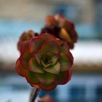kaktus :: Victor nemokaev