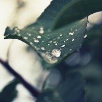 Свежесть...последний дождь лета :: Анжелика Марченко