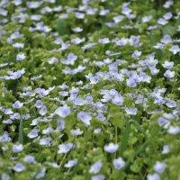 Веснаидёт-веснедорогу :: Juliya Fokina