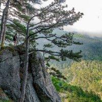 В Крымских горах (3) :: Андрей Козлов