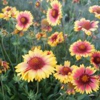 Цветы :: Ольга Почепаева