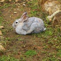 Кролик :: Михаил Пахомов